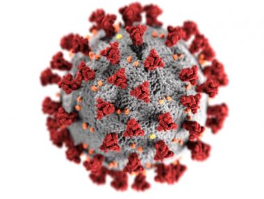 Palmeira tem 924 casos de coronavírus